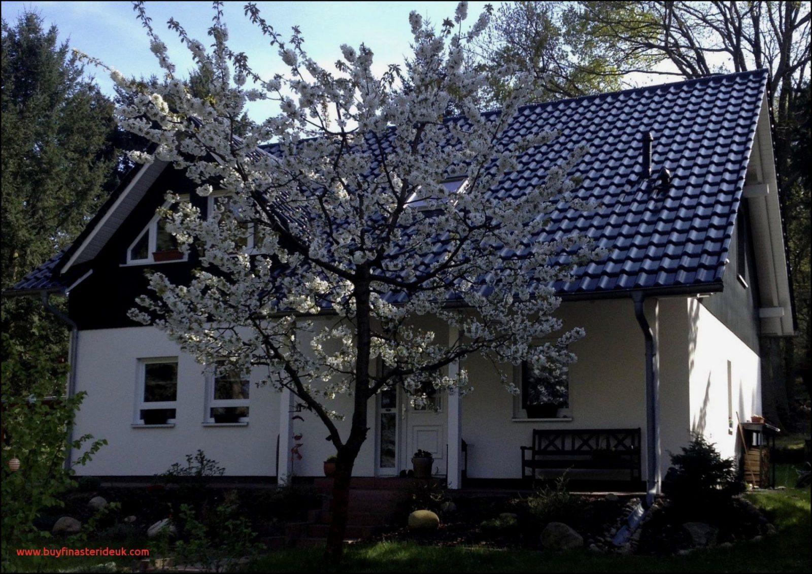27 Luxuskonzept Spandau Haus Kaufen  Wallpaper Farbe Ideen von Haus Kaufen Berlin Spandau Photo