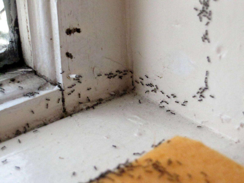 Ameisen Im Haus Und Garten Natürlich Mit Hausmitteln Bekämpfen von Ameisen In Der Küche Bild