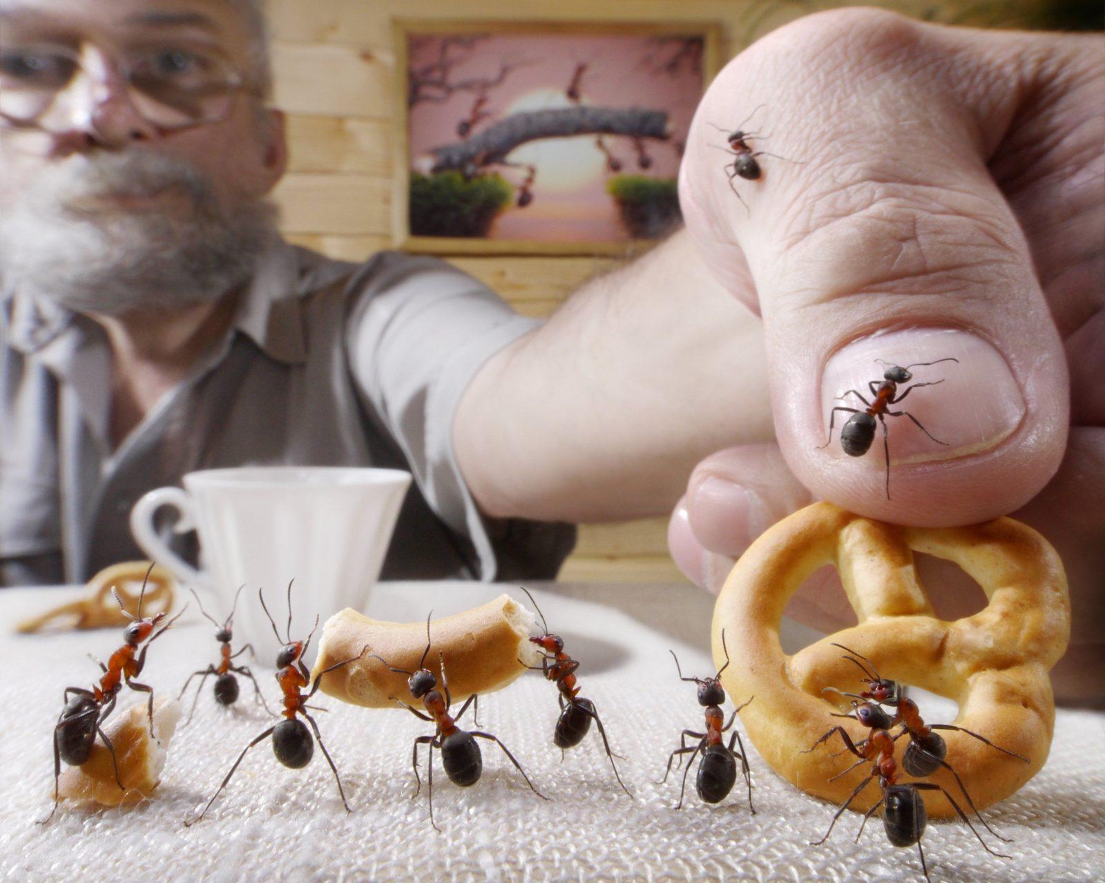 Ameisen In Der Küche 5 Mittel Die Helfen – Ohne Giftige Chemie – Giga von Ameisen In Der Küche Bild