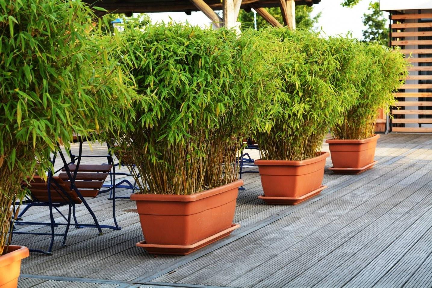 Balkon Sichtschutz Pflanzen Frisch Sichtschutz Terrasse Auf Von von Pflanzen Als Sichtschutz Terrasse Photo