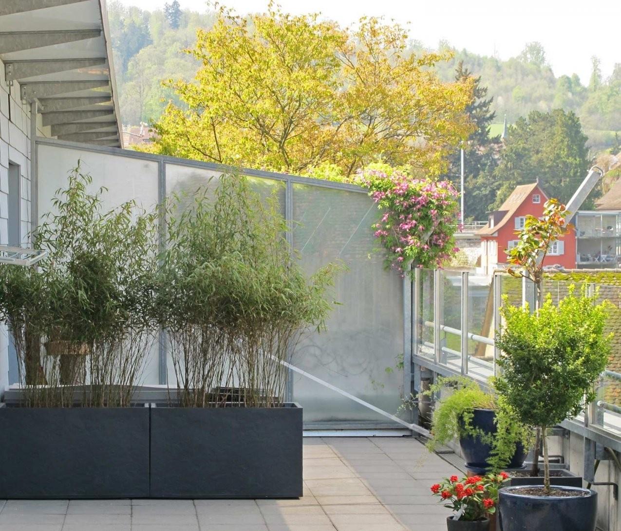 Bambus Als Sichtschutz Für Terasse Und Balkon Ist Einzigartig von Pflanzen Als Sichtschutz Terrasse Bild