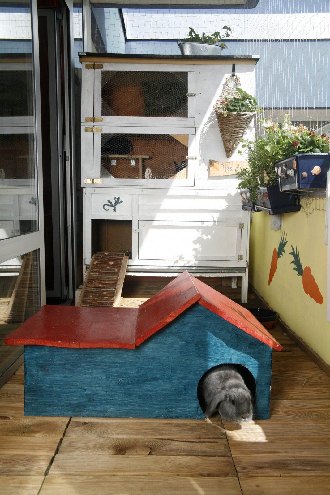 Bastelanleitungen Für Kaninchenfreunde  Ein Herz Für Tiere Magazin von Kaninchen Spielplatz Selber Bauen Bild