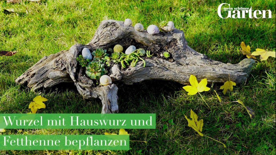 Basteltipp Wurzel Mit Hauswurz Und Fetthenne Bepflanzen  Youtube von Deko Ideen Mit Hauswurz Bild