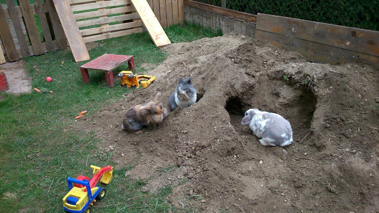 Beschäftigung  Kaninchenhilfe Deutschland Ev  Aktiv Für Kaninchen von Spielzeug Für Kaninchen Selber Machen Bild