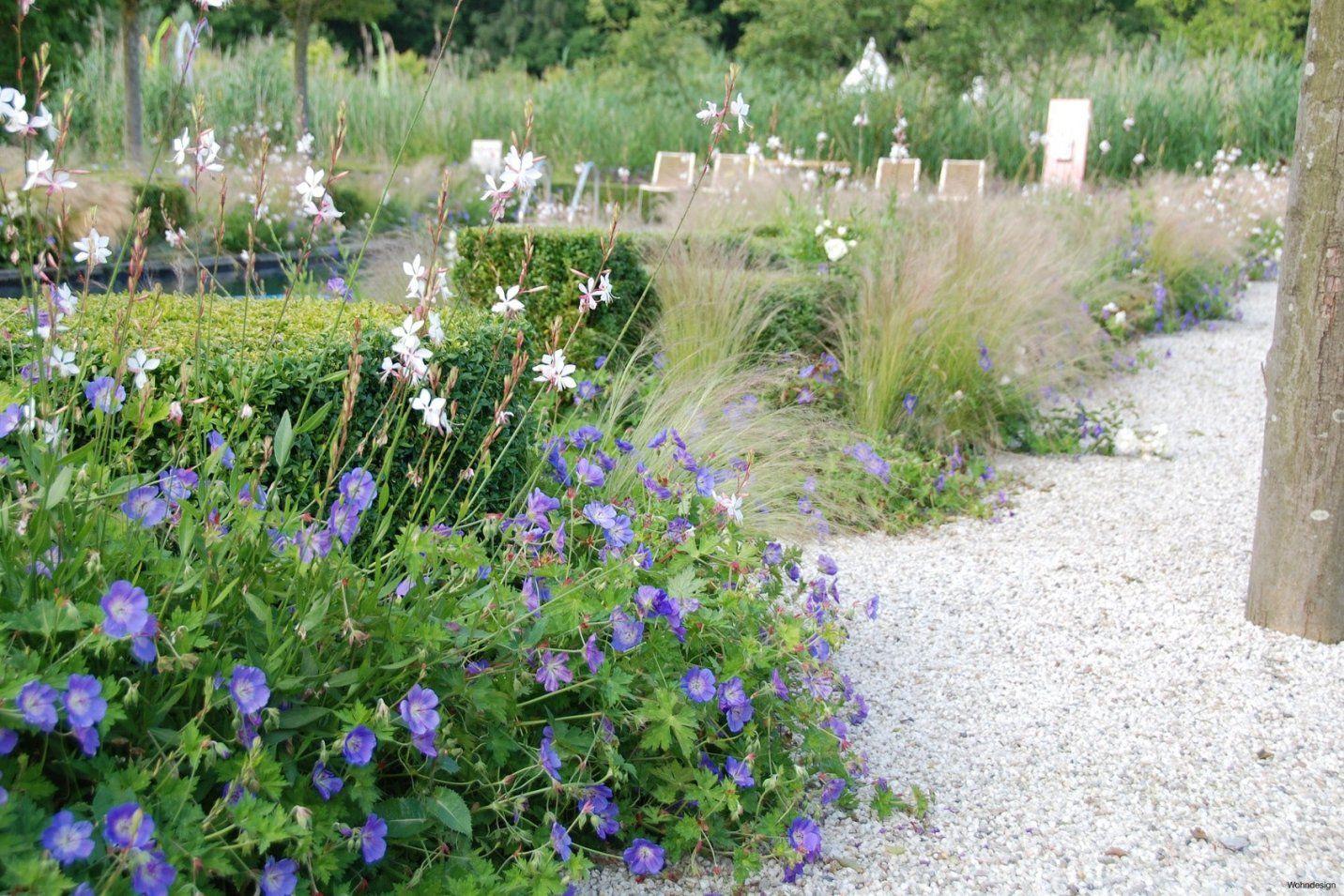 Blumixx Stauden Blumenkasten Set Kraeuter Und Blumen 6 Pflanzen von Stauden Sonniger Trockener Standort Photo