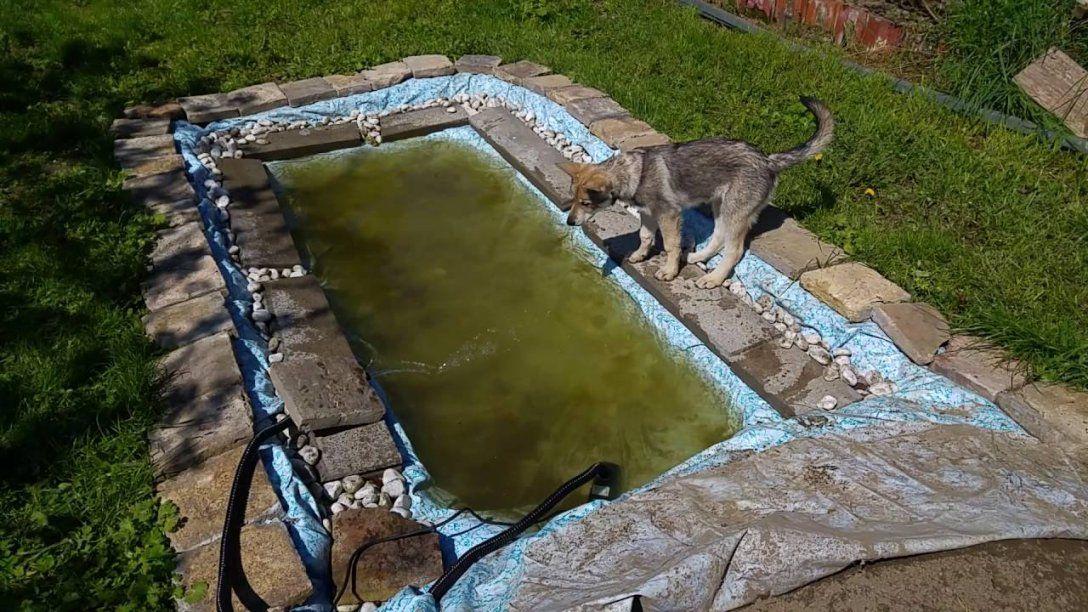 Chenoa Im Hundepool  Youtube von Hunde Pool Selber Bauen Bild
