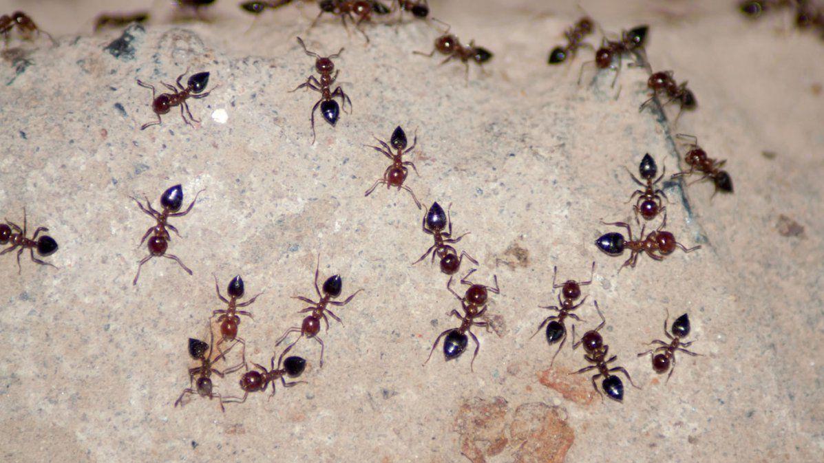 Das Große Krabbeln Schädlingsbekämpfung Im Haus  Gut Zu Wissen von Ameisen In Der Küche Photo