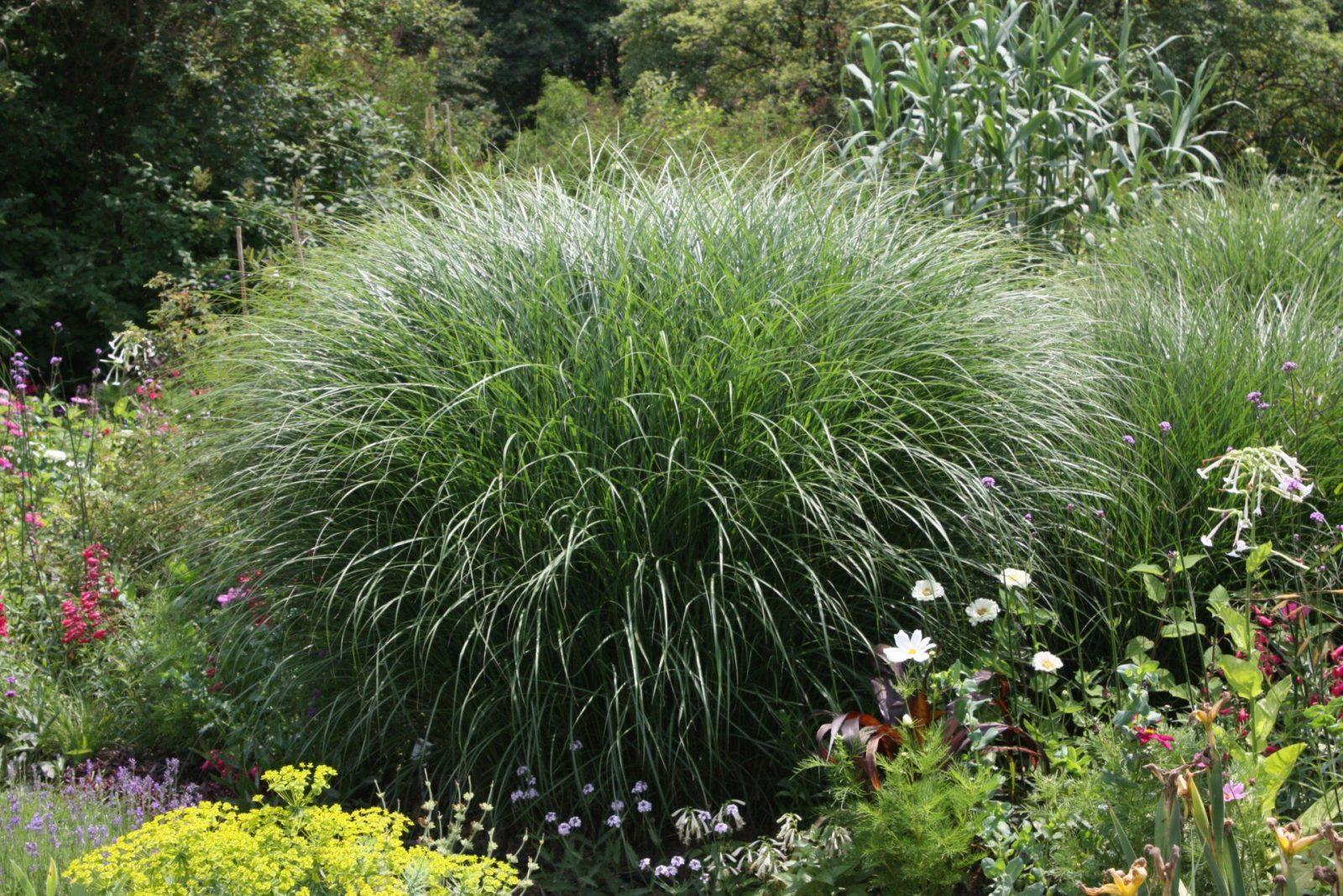 Der Richtige Standort Für Ziergräser Im Garten – Native Plants von Pflanzen Für Sonnige Trockene Standorte Photo