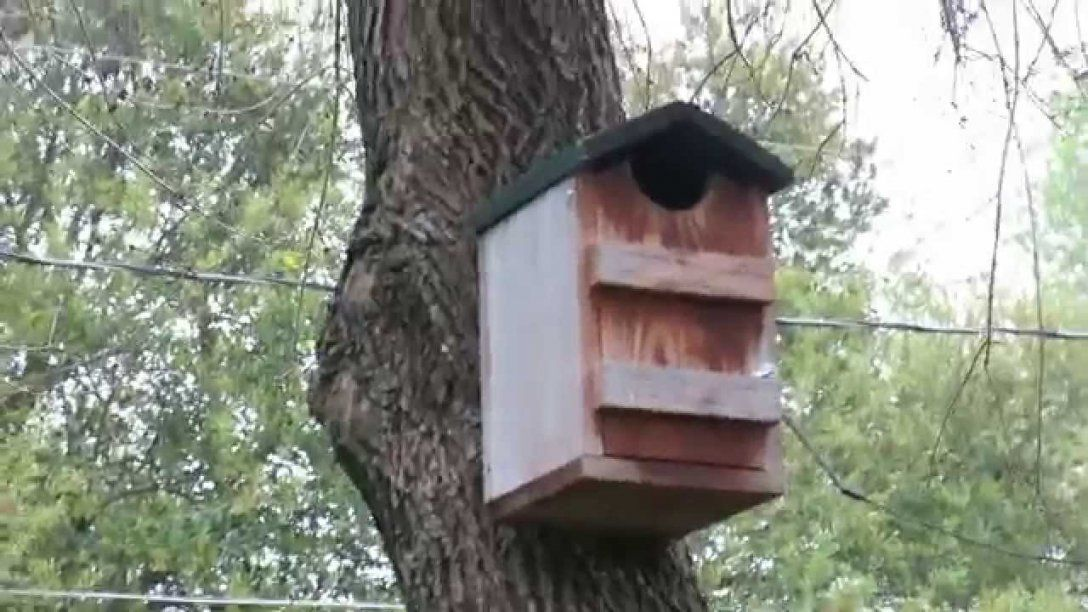 Eastern Screech Owl House  This Thing Is Awesome  Youtube von Screech Owl Box Placement Bild