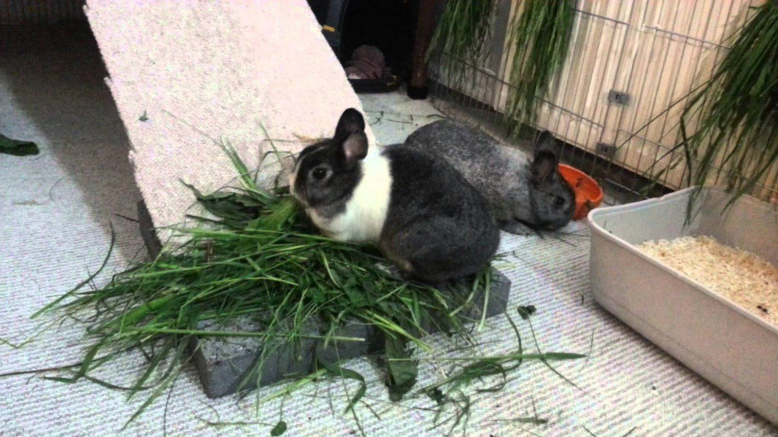 Elegant Kaninchen Spielzeug Selber Bauen – Tierspielzeug von Kaninchen Spielplatz Selber Bauen Photo