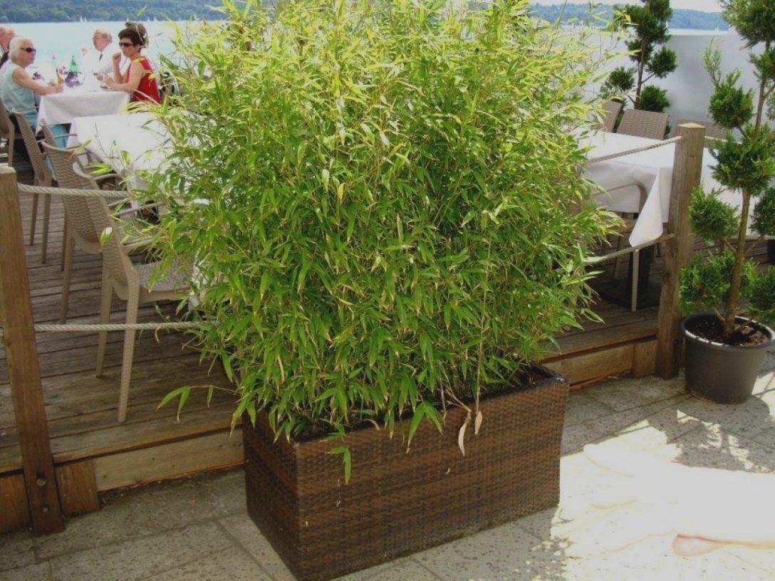 Elegantes Unikat Sichtschutz Terrasse Pflanzen 30 Beste Design Ideen von Pflanzen Als Sichtschutz Terrasse Photo