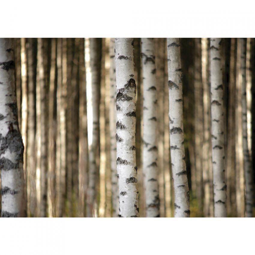 Fototapete No 2553  Vlies  Wald Tapete Bäume Birken Weiß Motiv von Tapete Birke Schwarz Weiß Bild