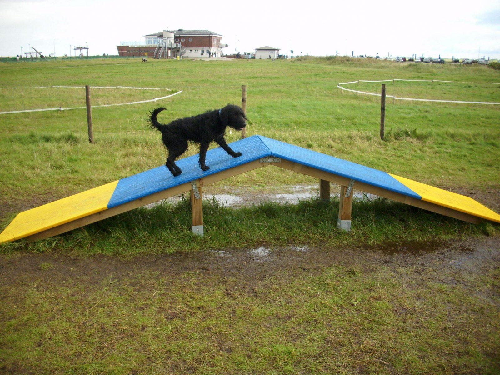 Funagilitypark Neßmersiel von Hunde Wippe Selber Bauen Photo