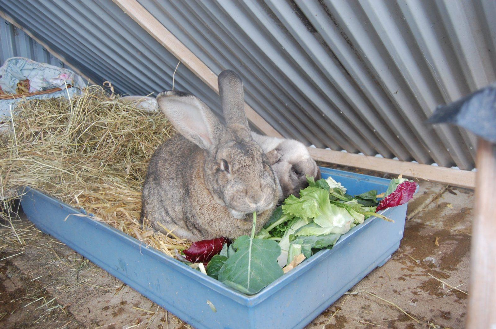 Fütterungsregeln von Spielzeug Für Kaninchen Selber Machen Bild