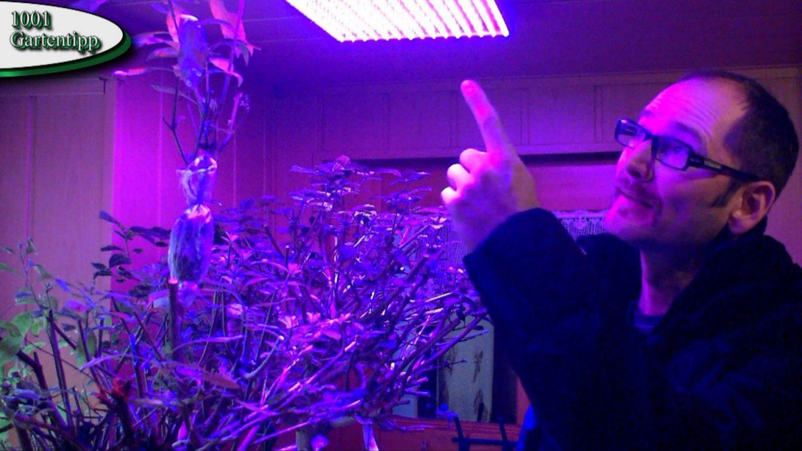 Gartentipp Februar 0212 Led Grow Lampen Für Jungpflanzen Und von Led Grow Lampe Selber Bauen Bild