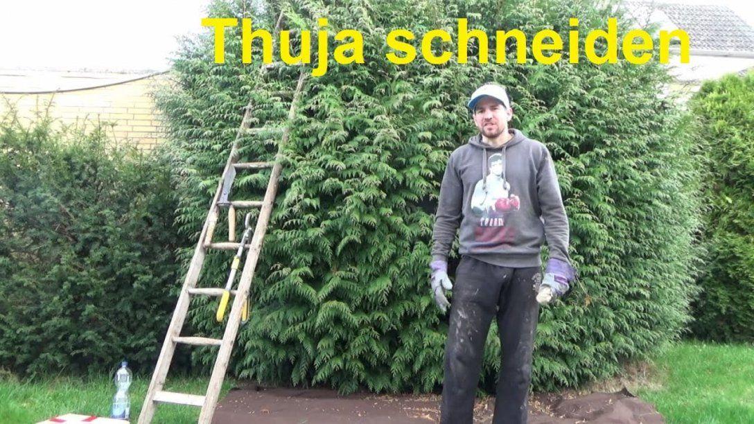 Große Thuja Schneiden Thuja Hecke Schneiden Konifere Schneiden von Thuja Smaragd Richtig Pflanzen Bild