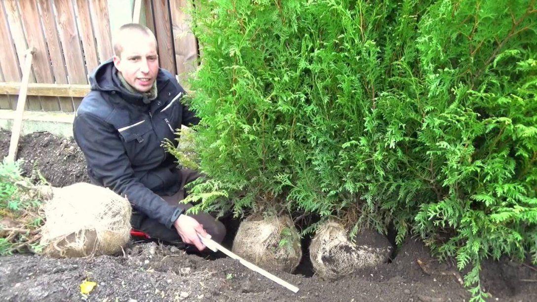 Hecke Pflanzen  Thuja  Erster Heckenschnitt  Tutorial  Hd  Youtube von Thuja Smaragd Richtig Pflanzen Photo