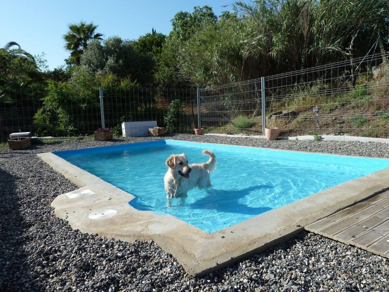 Hunde Pool Selber Bauen Atemberaubend Auf Kreative Deko Ideen In von Hunde Pool Selber Bauen Bild