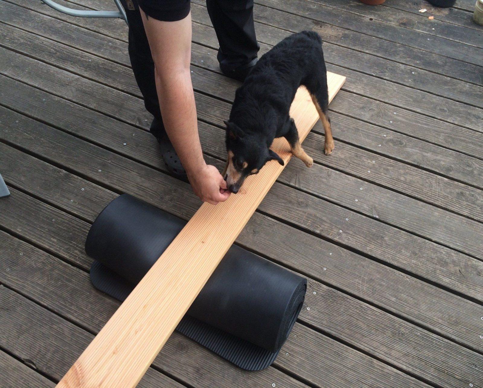 Hundebeschäftigung Tag 15  Die Wippe  Agility Geräte Wippe Und von Hunde Wippe Selber Bauen Photo