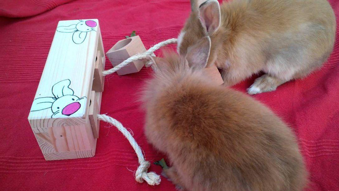 """Kaninchen Spielzeug  Logikspiel """"zauberwürfel""""  Youtube von Spielzeug Für Kaninchen Selber Machen Photo"""