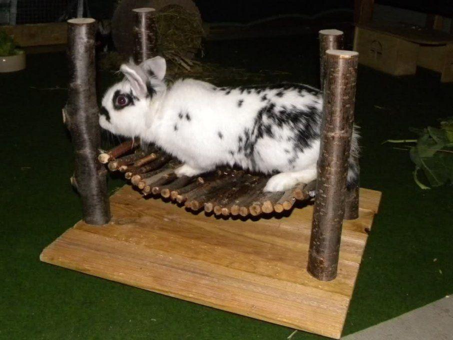 Kaninchen Spielzeug Selber Bauen  Swalif von Kaninchen Spielplatz Selber Bauen Bild
