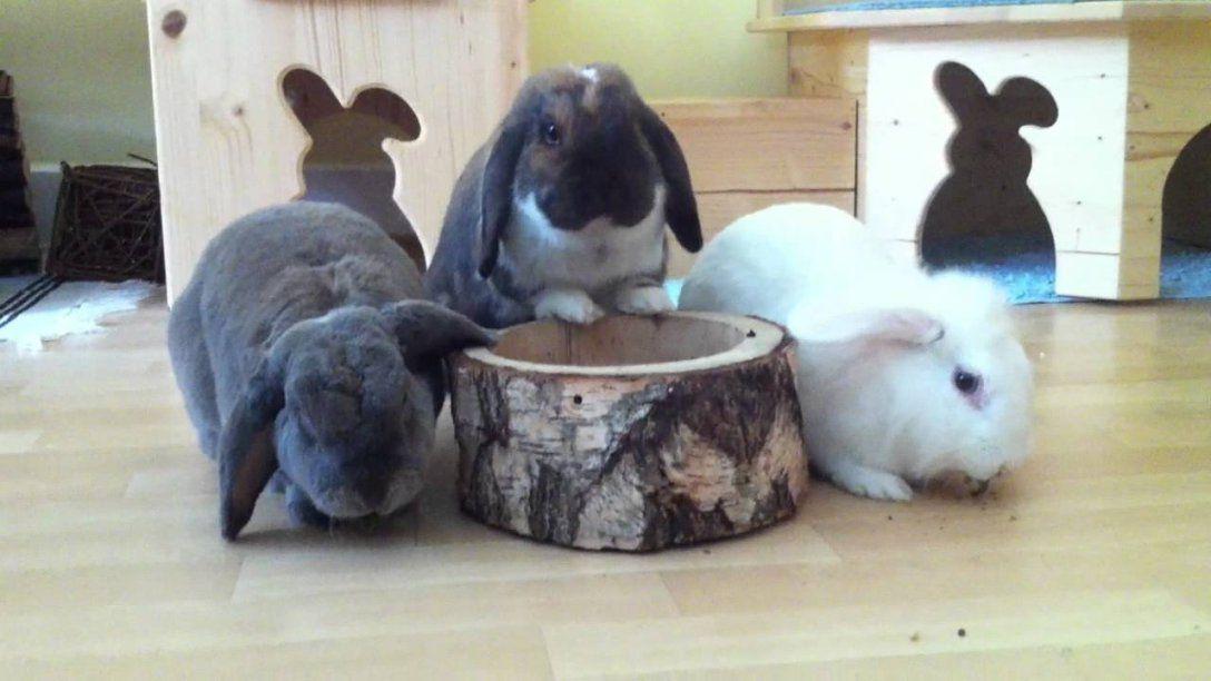 Kaninchen Spielzeug Selber Bauen  Swalif von Spielzeug Für Kaninchen Selber Machen Photo