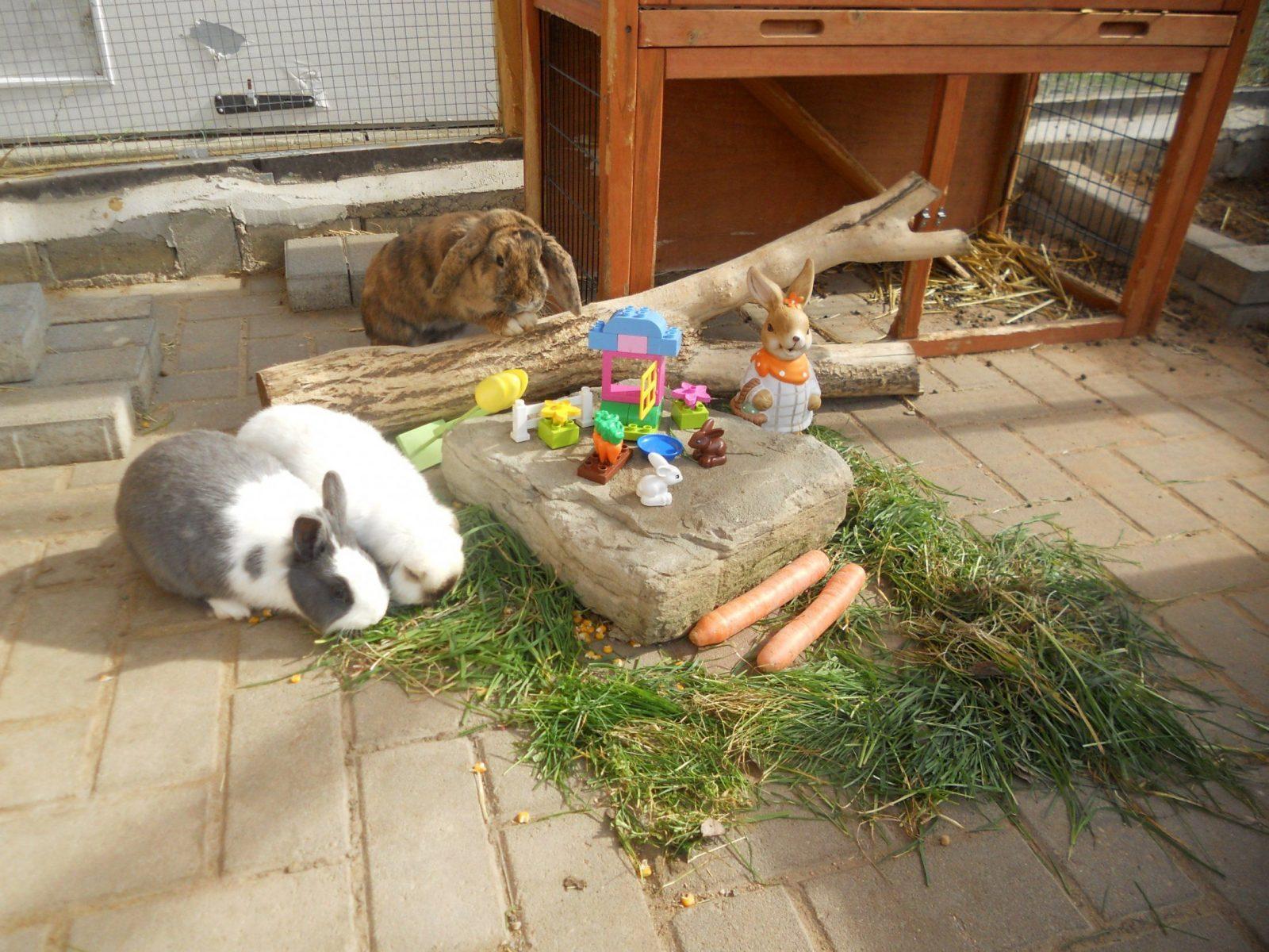 spielzeug für kaninchen selber machen | haus design ideen