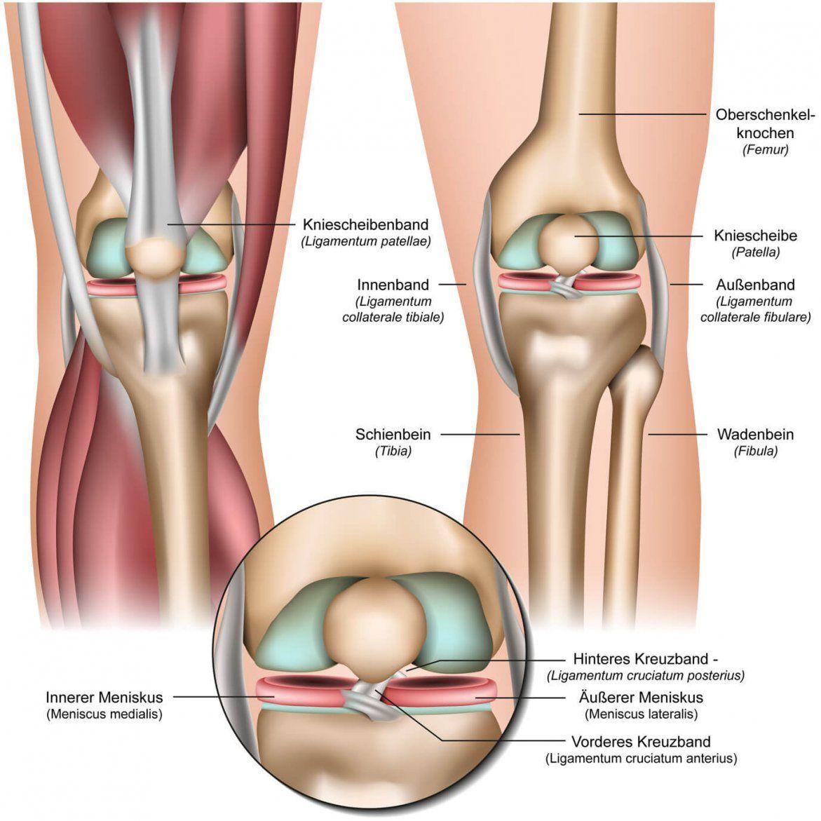 Knieschmerzen ▷ Ursache Behandlung Und Übungen  Liebscher & Bracht von Knieschmerzen Beim Treppe Runter Photo
