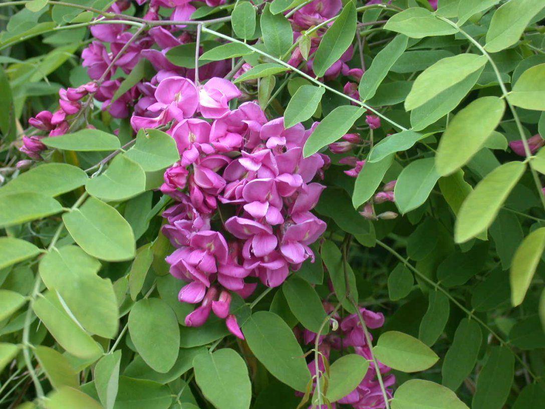 Kübelpflanze Gesucht Winterhart Windverträglich Sonniger Standort von Pflanzen Für Sehr Sonnigen Standort Photo