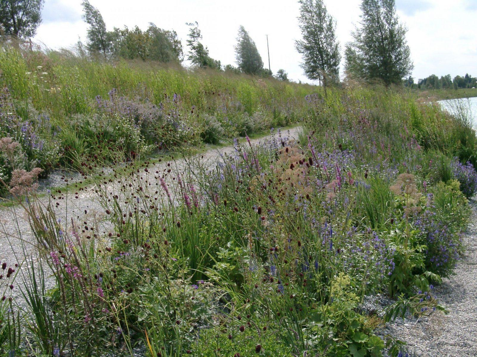 Lebendige Gärten Mit Heimischen Stauden – Das Grüne Medienhaus von Pflanzen Für Sonnige Trockene Standorte Bild