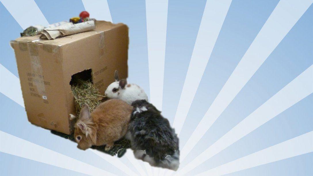 Manchmal Reicht Ein Karton Zum Glücklich Sein ;)  Stundenlanger von Spielzeug Für Kaninchen Selber Machen Bild