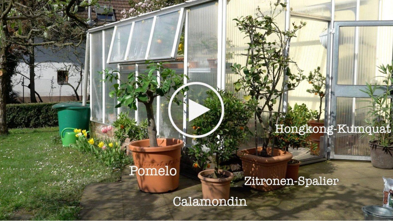 Mein Schöner Garten Forum Awesome Dekor Bezieht Sich Auf Mein von Mein Schöner Garten Forum Photo