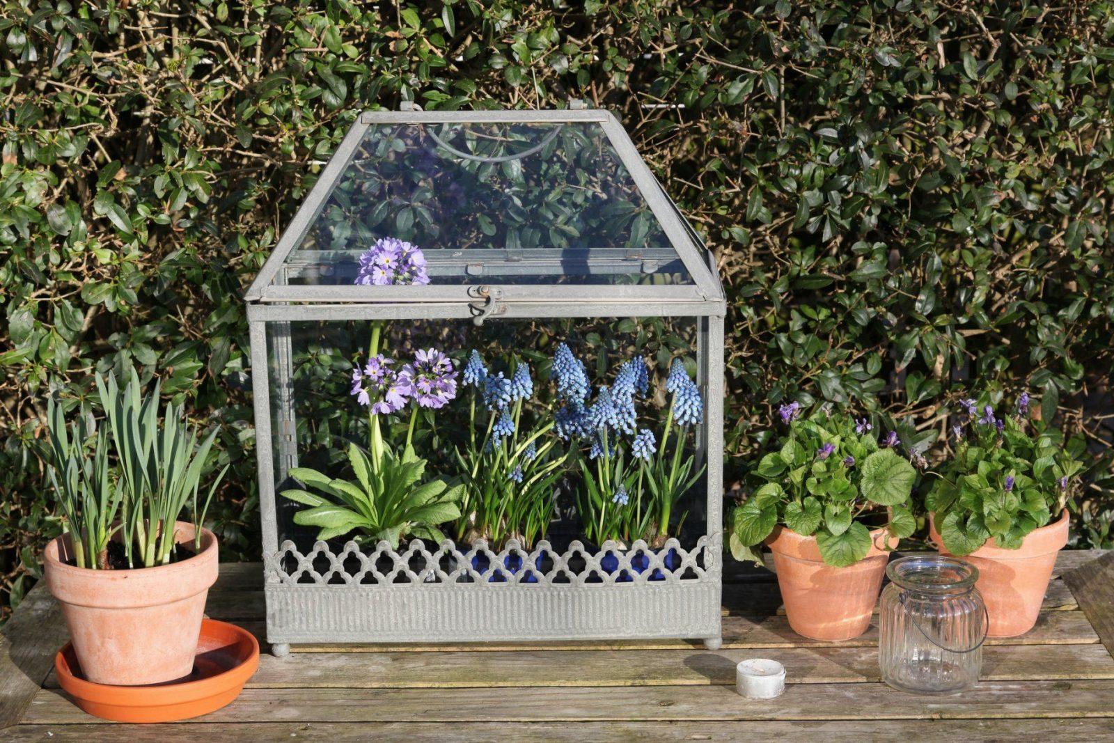 Minigewächshaus Für Den Balkon Tipps Zur Bepflanzung von Mini Gewächshaus Selber Bauen Frischhaltefolie Bild