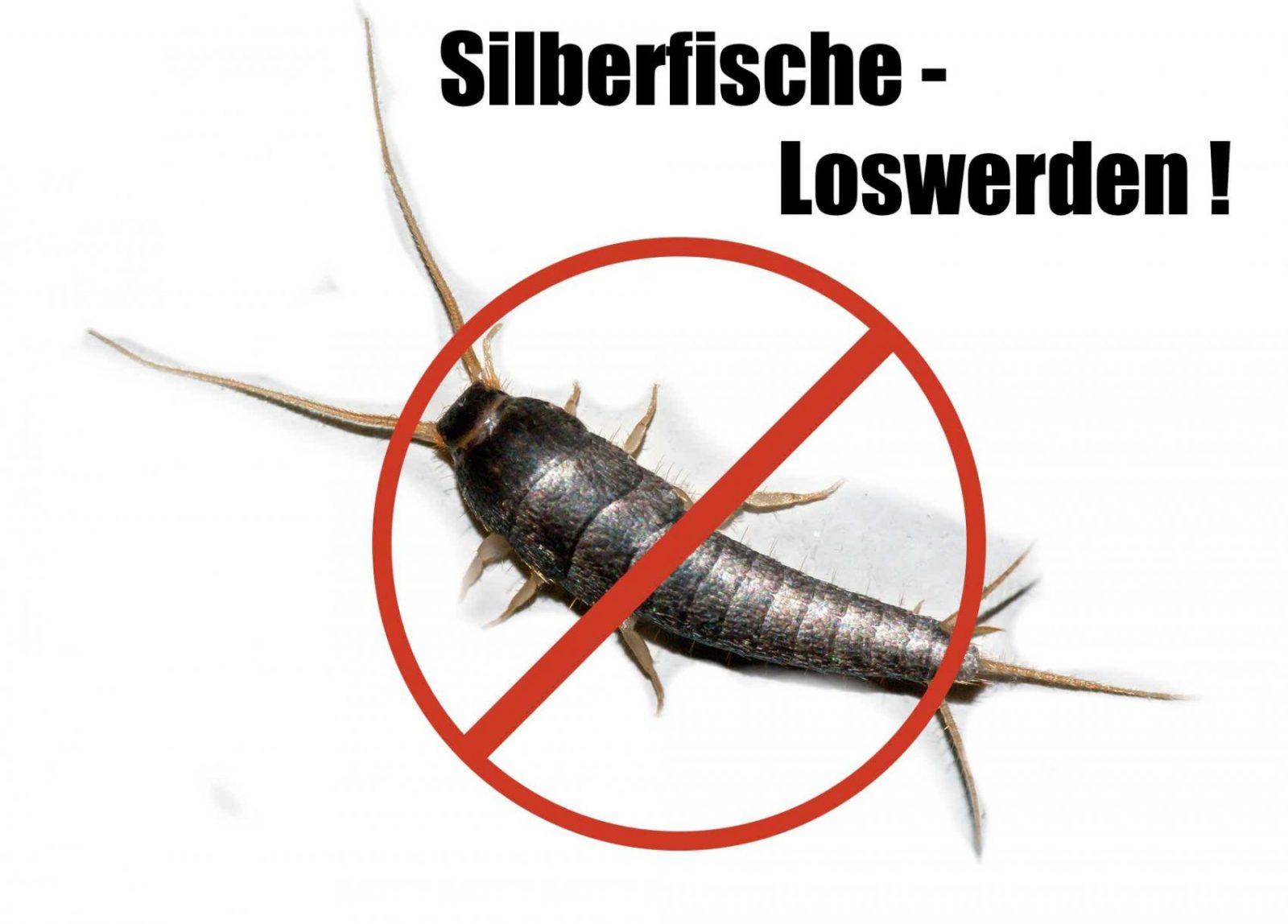 Mittel Gegen Silberfische Innenarchitektur Ehrf Rchtiges Mittel von Mittel Gegen Silberfische Im Schlafzimmer Bild