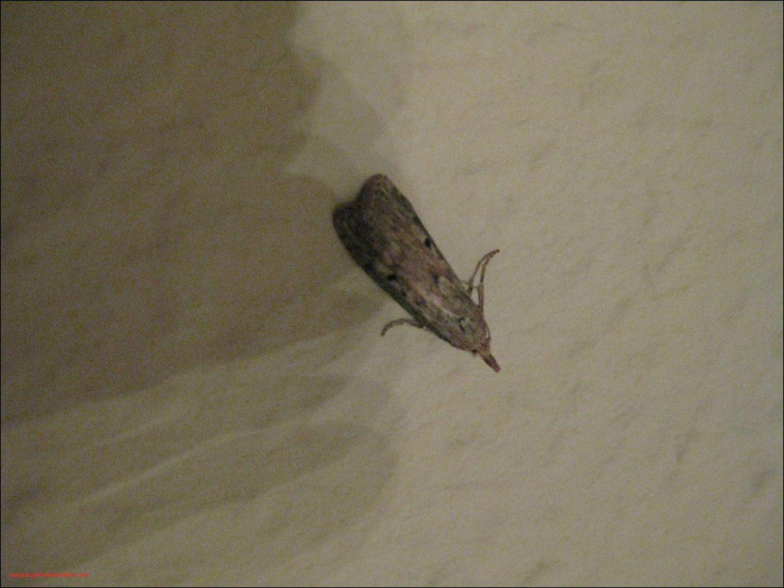 Motten Im Haus Von Bemerkenswert Kleine Motten In Der Küche von Motten Im Haus Woher Bild