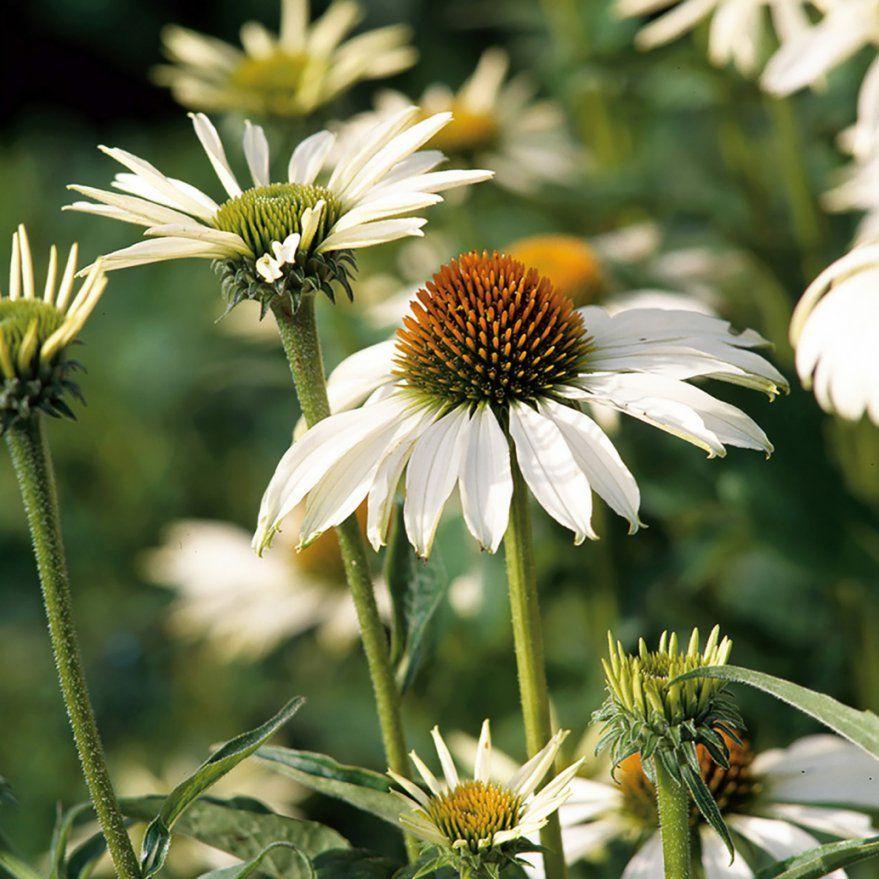 Pflanzen Für Sonnige Standorte Bilder Das Sieht Wunderschöne – Men von Pflanzen Für Sehr Sonnigen Standort Photo