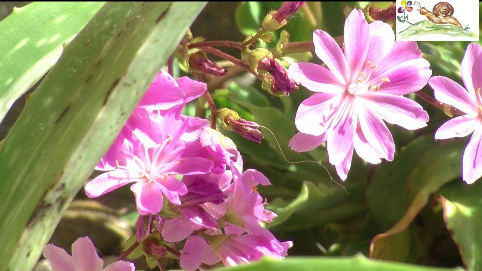 Pflanzen Für Trockene ☼ Sonnige ☼ Heiße ☼ Standorte Z B Unter von Pflanzen Für Sehr Sonnigen Standort Photo