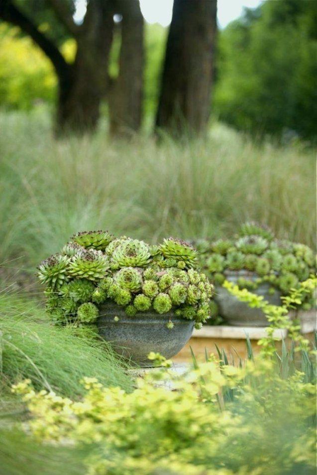 Pflanzen Sonniger Standort Einzigartig Pflanzen Fr Sonnige Trockene von Pflanzen Für Sonnige Trockene Standorte Photo
