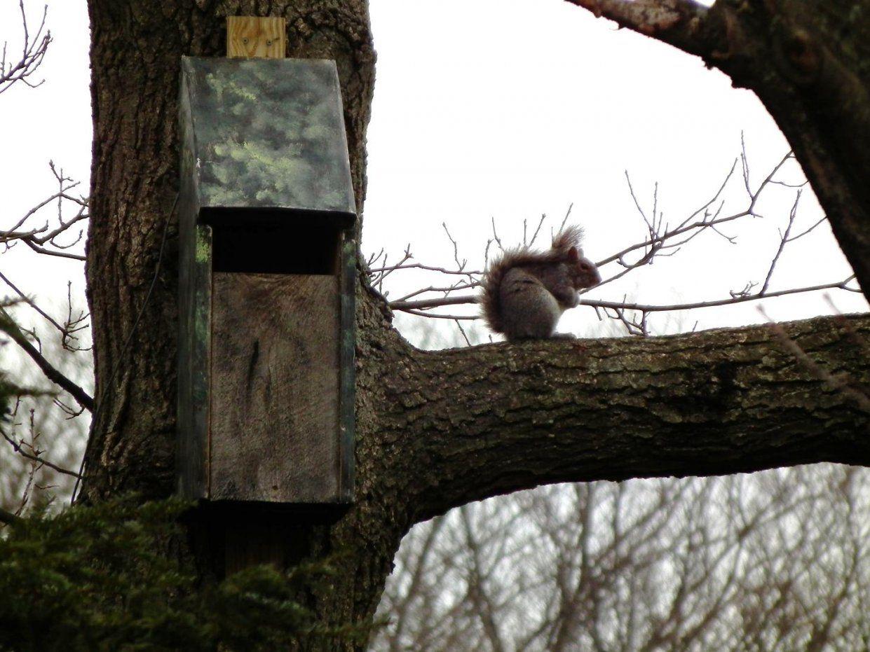 Squirrel  Owl Oasis Trail von Screech Owl Box Placement Photo