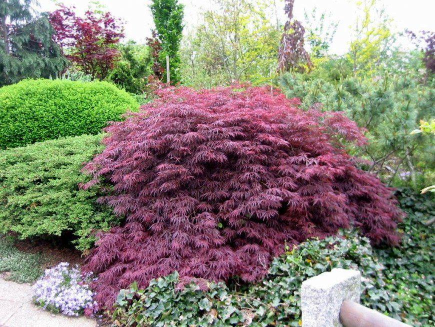 Pflanzen Für Sonnige Trockene Standorte