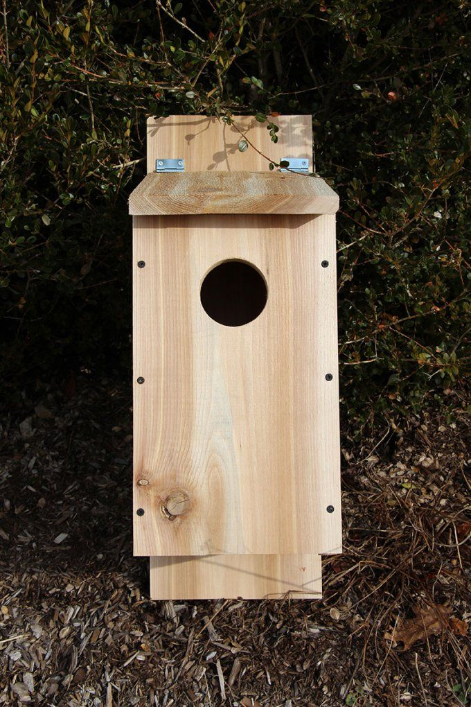 Step Screech Owl Box 800 Jw House Plans Fair Decorating Design Of von Screech Owl Box Placement Bild