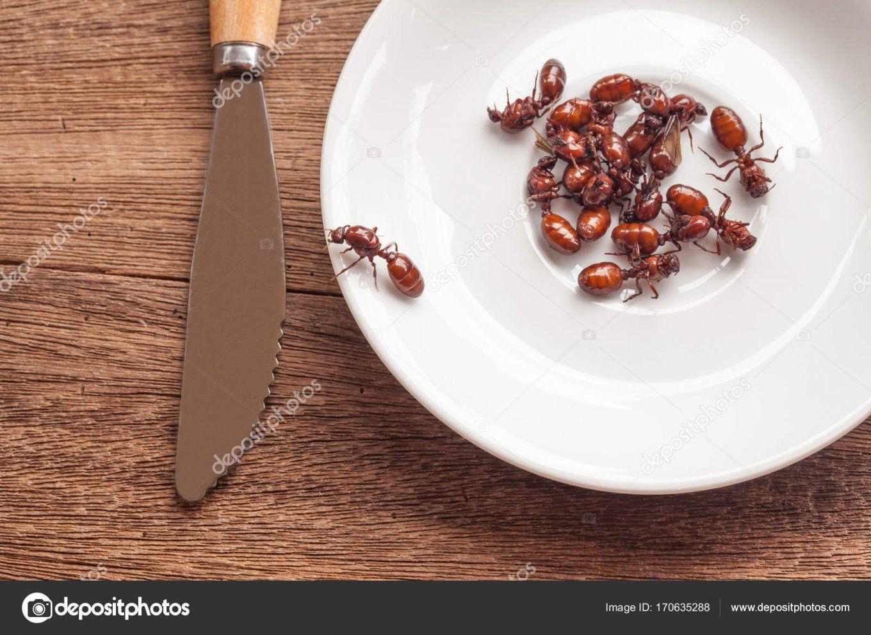 Unterirdische Ameisen Braten Ist Saubere Lebensmittel In Der Lokalen von Ameisen In Der Küche Bild
