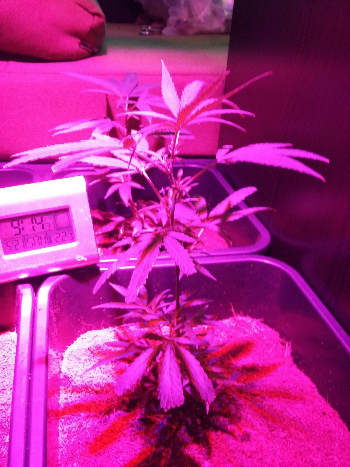 Welche Leds Für 1Qm²  Equipment  Cannabisanbauen Forum von Led Grow Lampen Selber Bauen Bild