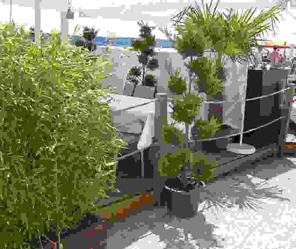 30 Beste Sichtschutz Terrasse Pflanzen Designideen  Garten Design von Sichtschutz Für Terrasse Pflanzen Photo