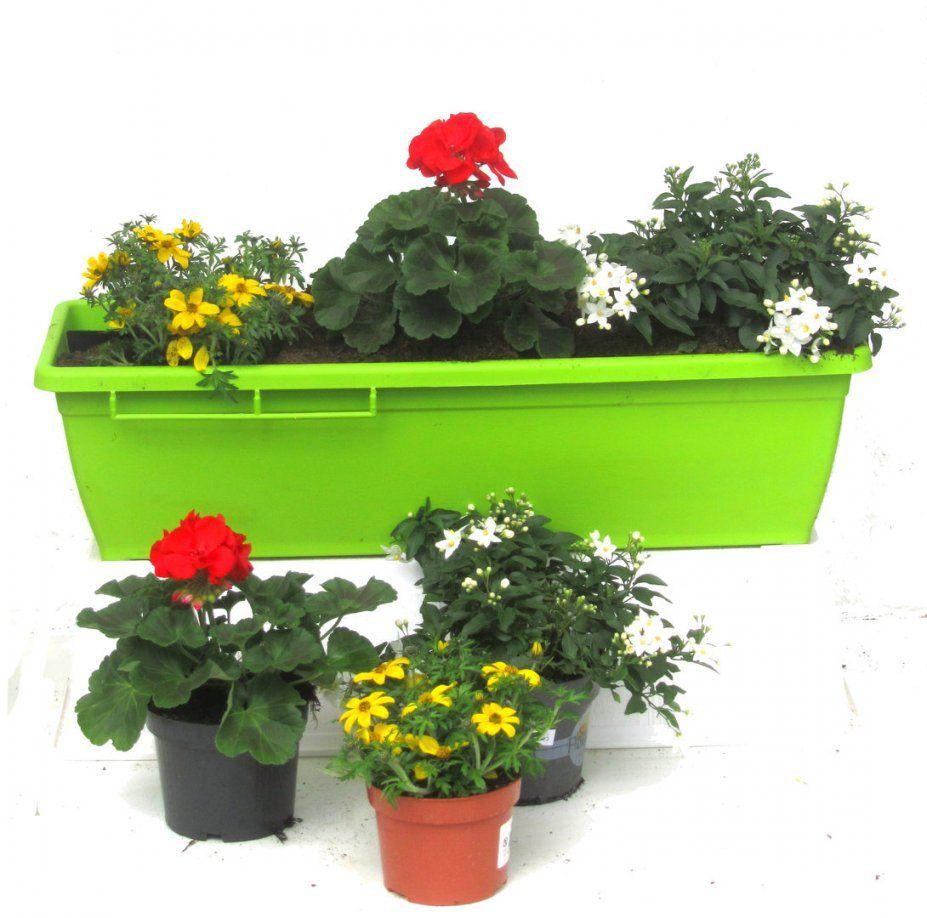 Balkonpflanzen Sonne  Online Kaufen  Kräftige Pflanzen von Balkonpflanzen Für Pralle Sonne Photo