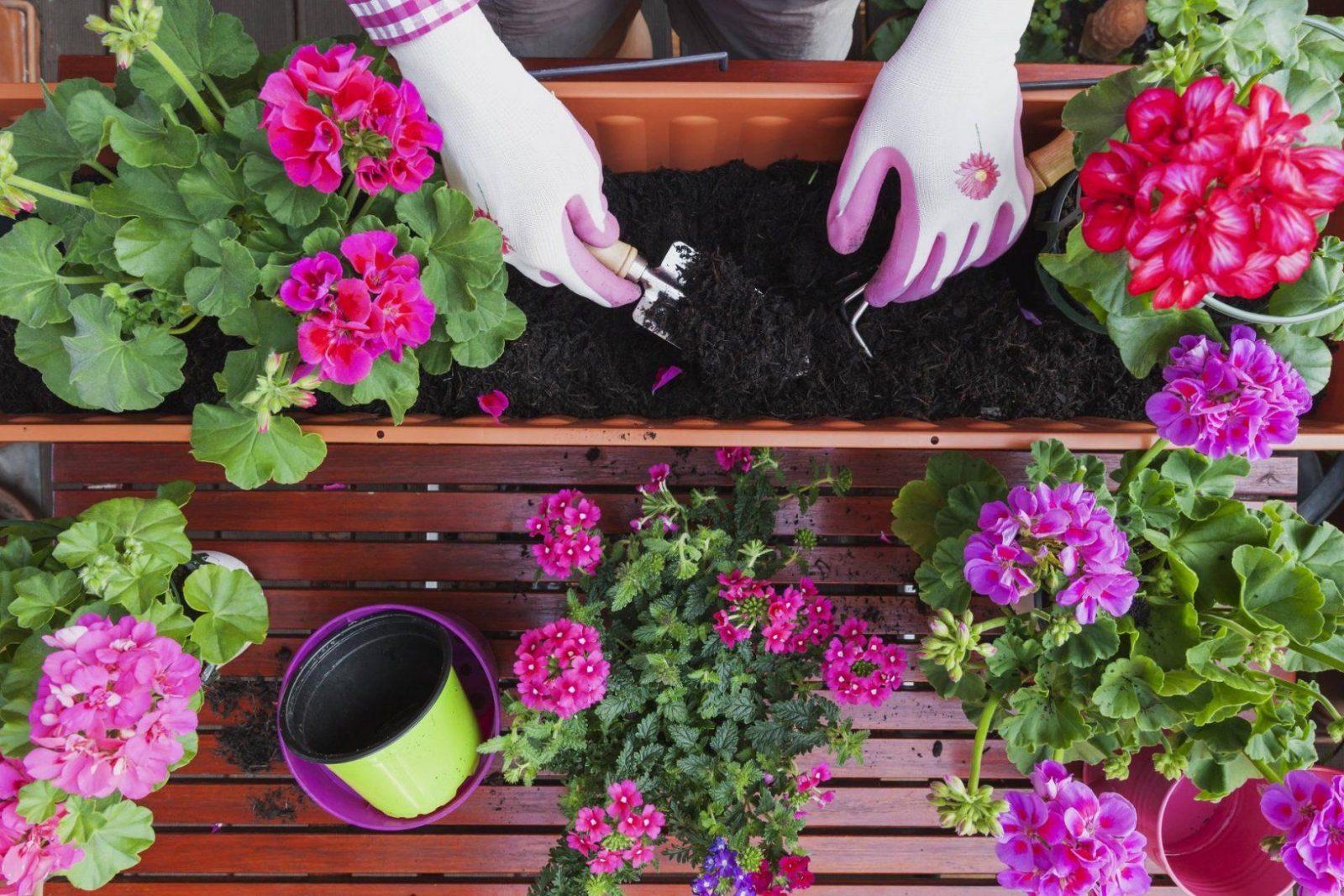 Balkonpflanzen Tipps Und Infos Zur Balkonbepflanzung von Balkonpflanzen Für Pralle Sonne Bild