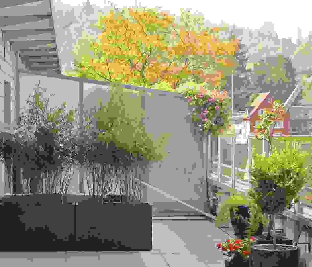 Bambus Als Sichtschutz Für Terasse Und Balkon Ist Einzigartig von Sichtschutz Für Terrasse Pflanzen Bild