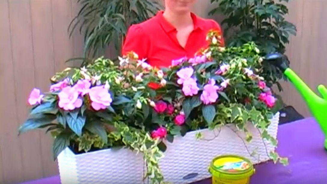 Bellandris – Balkonkästen Für Sonne Und Schatten Bepflanzen  Youtube von Balkonpflanzen Für Pralle Sonne Photo