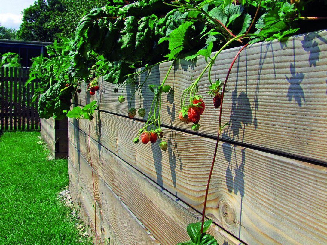 Bequeme Ernte Im Hochbeet  Kleingarten Magazin von Hochbeet Bepflanzen Erstes Jahr Bild