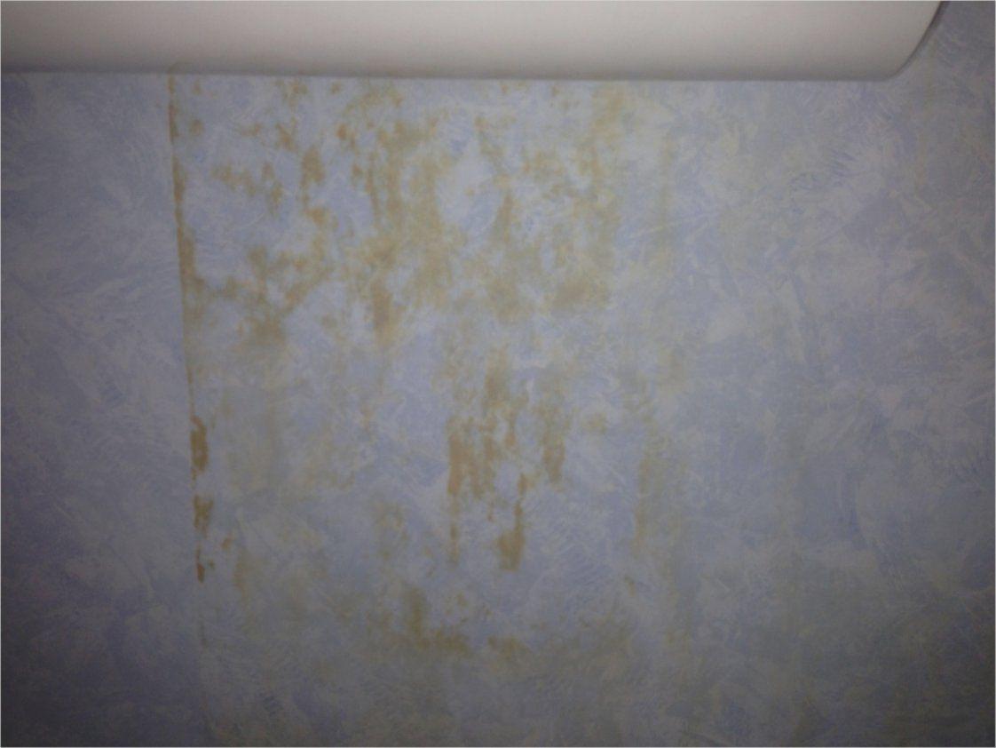 Bilder Von Gruner Schimmel Im Schlafzimmer Einrichtung Grüner Farben von Grüner Schimmel Im Schlafzimmer Photo